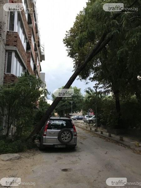 Дърво падна върху автомобил в Пловдив, заплашва да изпотроши прозорците на кооперация