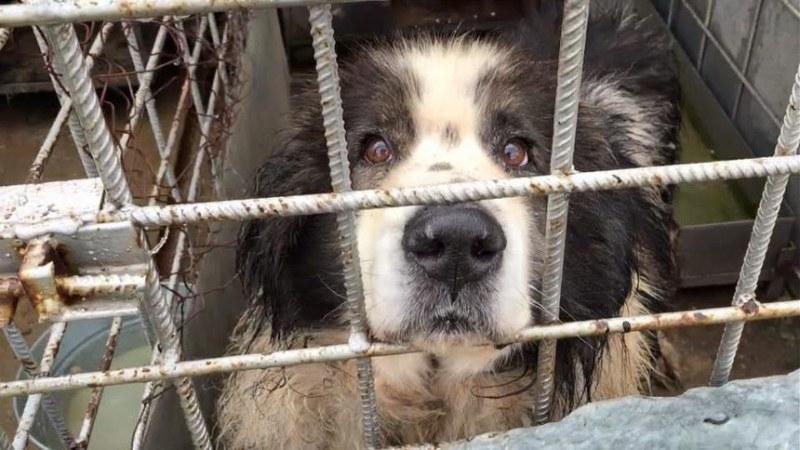 Затварят приюта за бездомни кучета в Дупница! Търсят стопани на животните