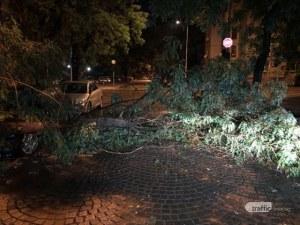 Дърво се стовари върху коли в пловдивския квартал Кючук Париж
