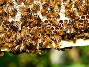 Пчели нападнаха двама туристи във Франция! Ужилиха ги над 200 пъти