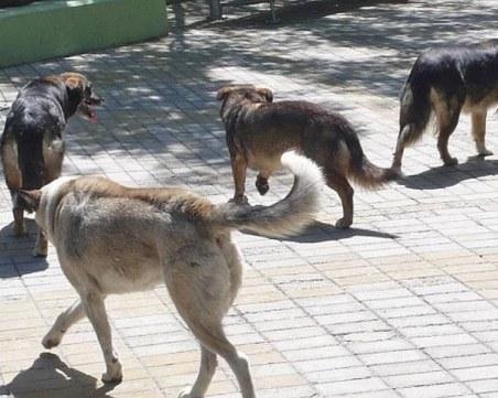 Куче нахапа дете в Хасково
