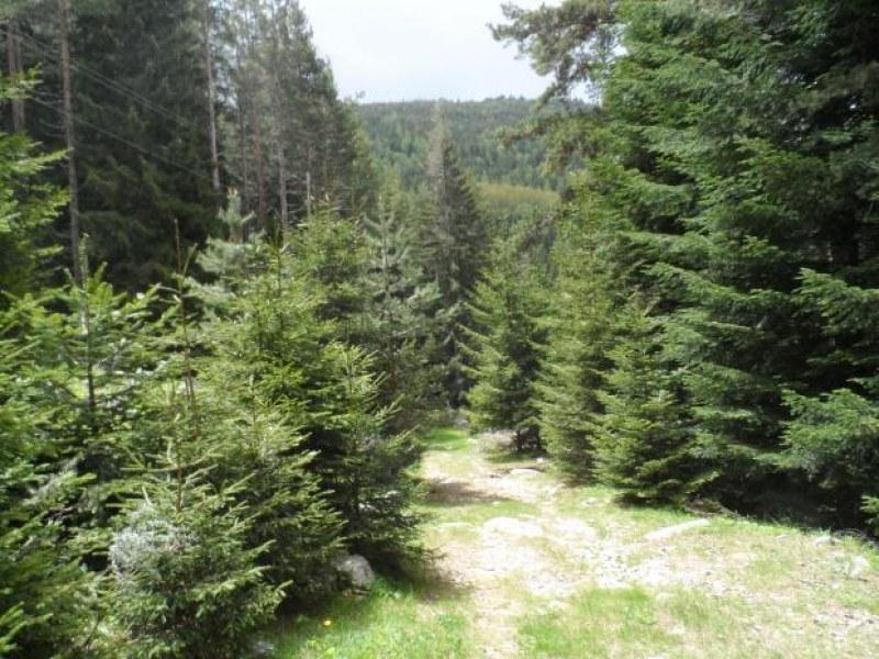 50-годишна жена изчезна в гора край Драгоман