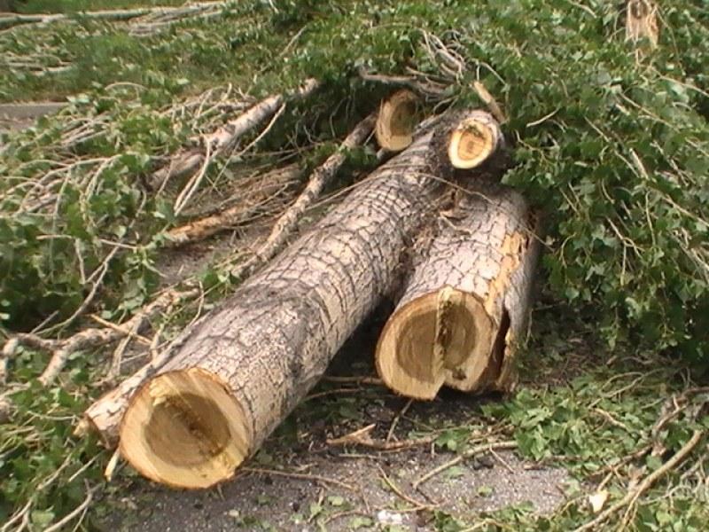 Старо дърво се стовари върху 18-годишен, момчето е загинало