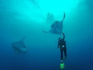 Гигантско морско същество помоли гмуркач за помощ