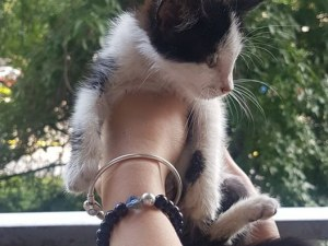 Спасиха малко котенце на оживено кръстовище, търсят му семейство