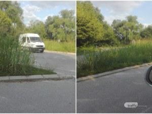 Висока трева прегради кръгово кръстовище край Пловдив