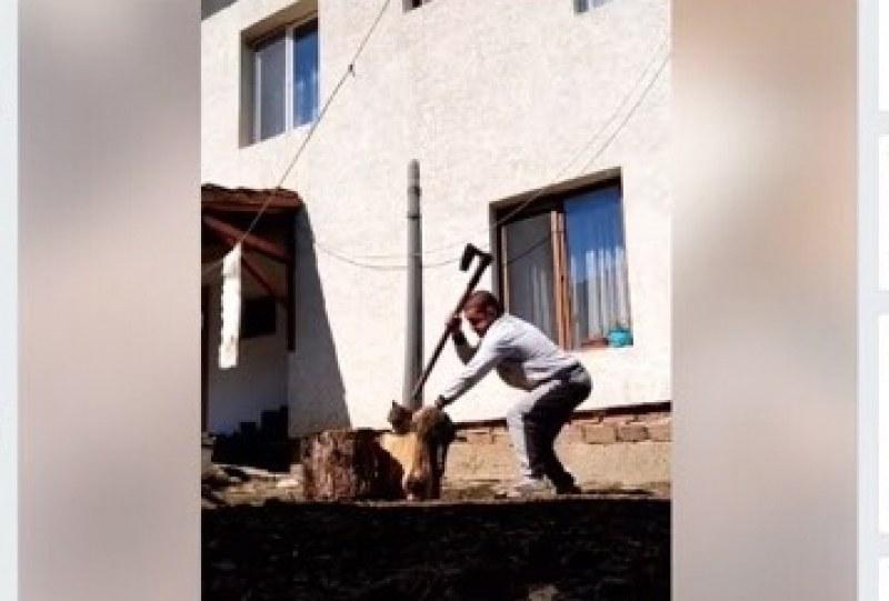 11 месеца условно за изверга, който съсече котка с брадва