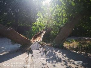 Паднало дърво блокира квартална улица в пловдивския