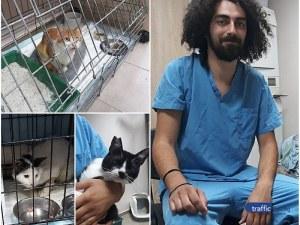 Пловдивски ветеринари лекуват и кастрират безплатно улични котки