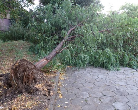 Градушка, пороен дъжд и бурен вятър удариха Кърджали