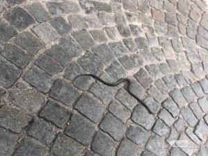 Змия се качи