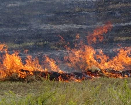 Пламъците в Хасковско обхванали дъбова гора, фронтът на пожара е 3 километра
