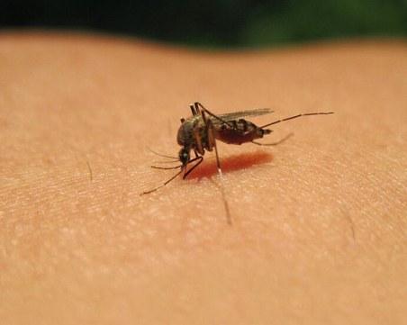 Два нови случая на западнонилска треска у нас! Инфекцията е внесена от Кипър