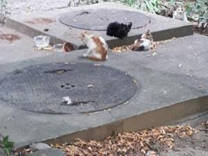 Бездомни котета остават без храна! Пловдивско НПО моли за помощ