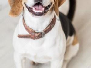 Защо все повече кучета търсят дом? Кучета има, хора за тях-не!