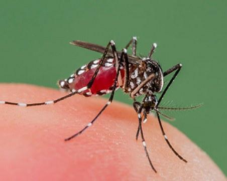 Малария плъзна в бежанския лагер в Харманли