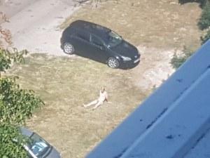 Гол софиянец щръкна на полянка пред блока, полицията го прибра