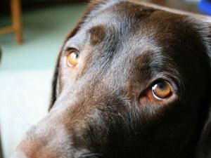 Мъж застреля две кучета в Търговище, задържаха го