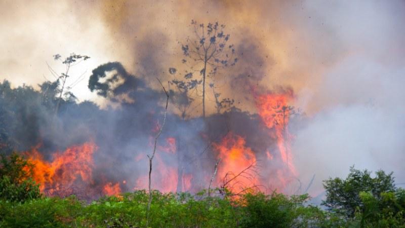 Рекордни пожари опустошиха Амазонската джунгла