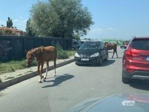 Коне се наредиха на опашките пред КАТ - Пловдив