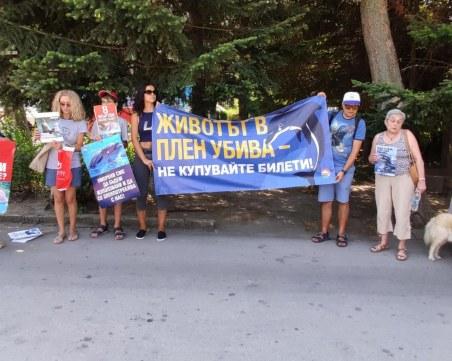 Искат затваряне на делфинариума във Варна, ръководството излезе с позиция