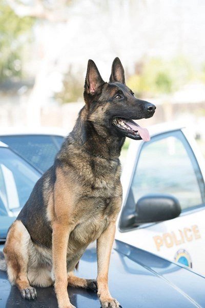 Полицейско куче загина в патрулка заради прегряване