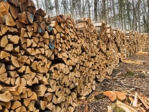 По-скъпи дърва за огрев в Пловдивско заради мерките срещу чумата по свинете