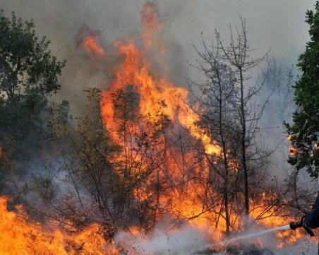 Пожар изпепели 100 декара гора край Девин
