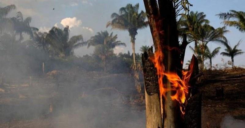 Бразилия: Всичко е под контрол, не искаме помощ! По-добре залесявайте Европа
