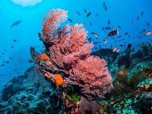 Климатичните промени влошават състоянието на Големия бариерен риф