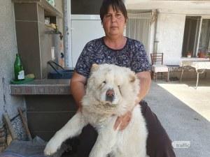 Питбулите, нахапали жена в Пловдив, и друг път са нападали нея и кучето й
