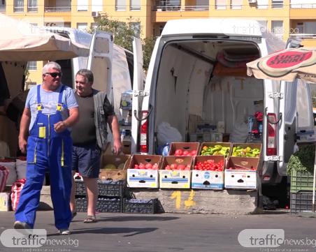 Пробутват ни турски хибрид за розов домат
