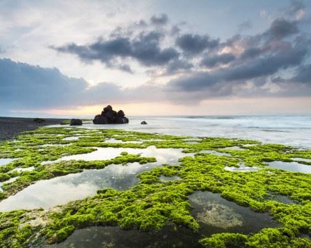 Смъртоносни водорасли се натрупаха по плажове около Франция