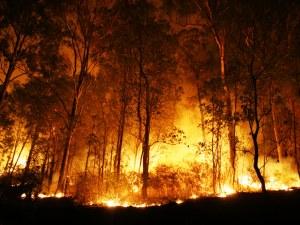 Евакуираха 50 души заради голям пожар край Лутраки