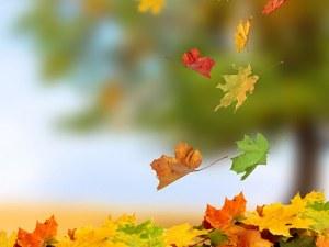 Астрономическата есен започва днес! Посрещаме я със слънце