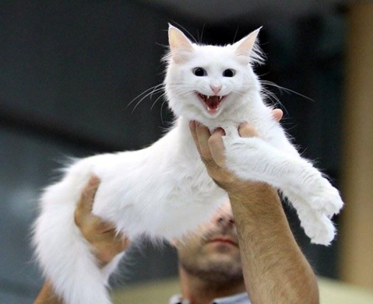 Жестокост! Пловдивчанин изхвърли котката си от шестия етаж, писанката почина