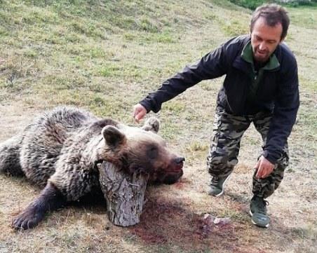 Гръмнаха нагла мечка, убила пет овце в Кожари, върнала се за още