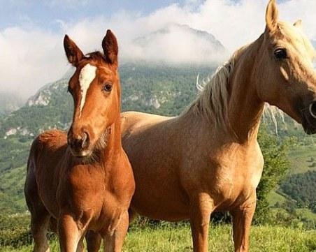 Застреляха кобила във Видинско, търсят извършителя