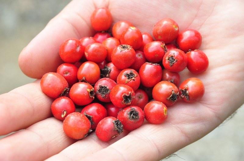 6 ползи от консумацията на червени боровинки