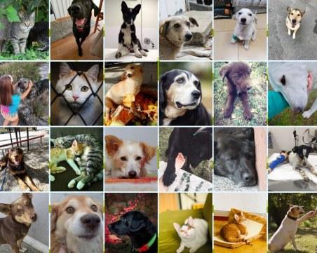 Осинови любовта: Изложба напомня за бездомничетата в Световния ден за защита на животните
