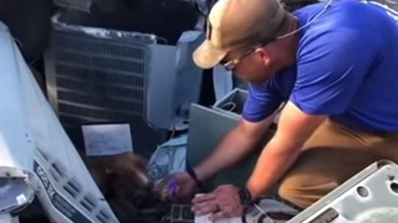 Oткриха живо куче под руините на сграда, рухнала при урагана Дориан
