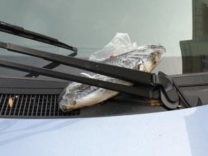 Паркираш неправилно, получаваш риба на предното стъкло