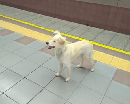 Издирват изоставеното куче в метрото, огранизация му търси стопанин