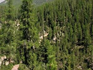Собственици на гори искат да продават на държавата