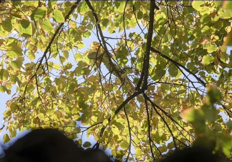 Свалиха еднометрова игуана от дърво в Стара Загора
