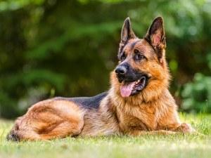 13-годишен открадна домашно куче в Пазарджик