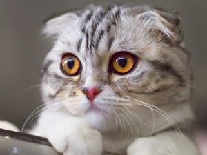 Kонкурс за котешка красота събира 200 котки от цял свят в Турция