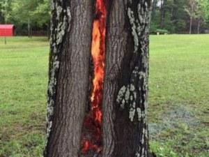 Клошар изгоря като факла в хралупа на дърво
