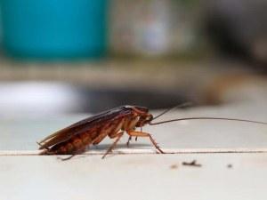 Как да се отървем завинаги от хлебарките?