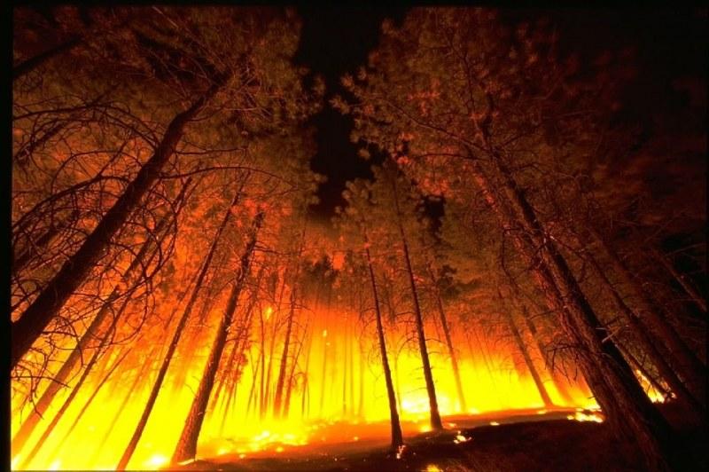 Опустошителните пожари в Калифорния взеха жертви